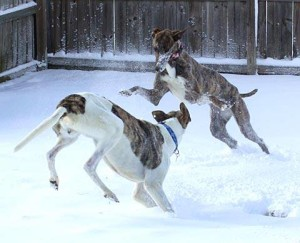 Lady and Fritz playing in the snow together