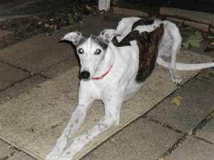 Sassy passed to the Bridge on October 26, 2009