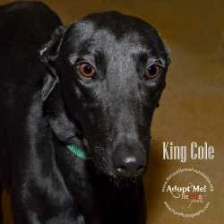 tn-king-cole